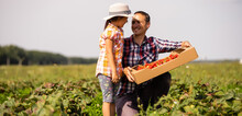 Father And Child Holding Wild Picked Strawberries In Summer