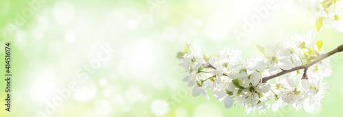 Foto Spring cherry blossom