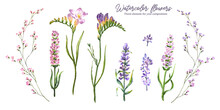 Set Of Floral Elements Watercolor Isolate