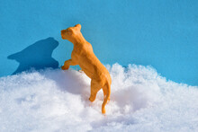 A Yellow Lioness Stands With Its Front Paws On A Snowdrift.