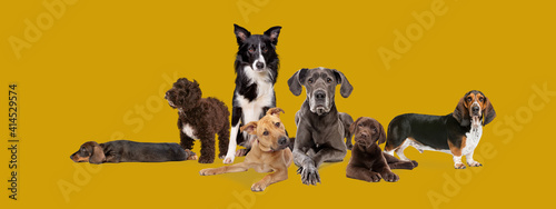 Tela seven different dog breeds