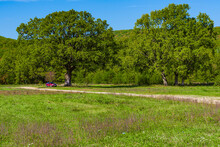 Landscape Meadow With A Centuries-old Oak Trees