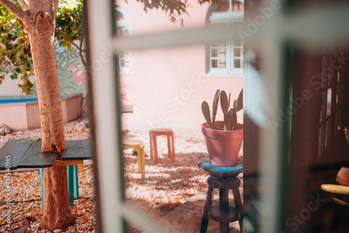 Fototapeta Reflected in a window of a cactus in a courtyard of a hotel