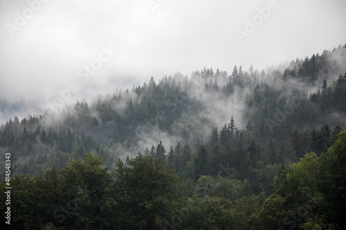 Foto Europe, Germany, Bavaria, Berchtesgaden, Hillside Forest in Early Morning Fog