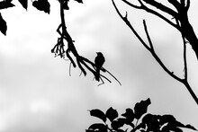 Pássaro Na árvore