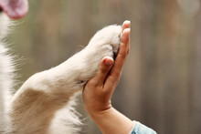 Dog Is Giving Paw To The Woman. Dog's Paw In Human's Hand. Domestic Pet.