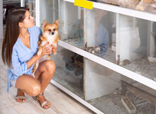 Adult Woman With Small Dog In Hands Looking At Hamsters In Terrariums In Pet Shop