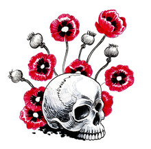 Human Skull And Red Opium Poppy Flowers. Ink Drawing