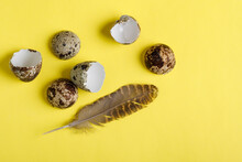 A Quail Egg Shell And A Feather On A Yellow Background.
