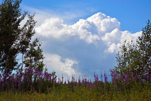 Cumulus White Clouds Over A Flowering Meadow. Wildflowers Against The Background Of The Sky And Vegetation. Natural Summer Background.