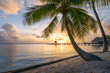 Beautiful Sunset At A Tropical Beach With Palm Tree