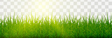 Vector Grass, Lawn. Grasses Png, Lawn Png. Young Green Grass With Sun Glare.