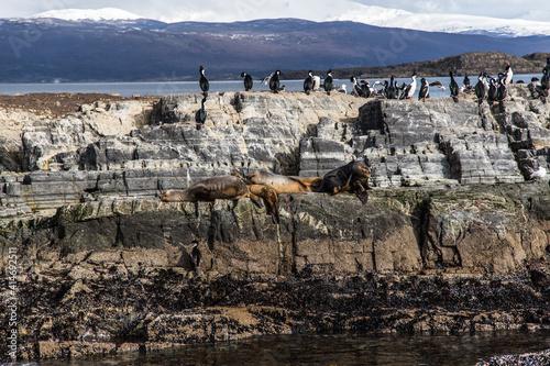 Carta da parati Argentina - Patagonia - Tierra del Fuego