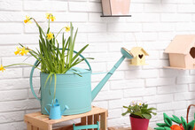 Beautiful Daffodils In Watering Can On Wooden Crate Near White Brick Wall Indoors