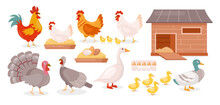 Chickens Farm Birds Isolated Set, Goose, Duck, Hen And Rooster Walking With Baby Chickens