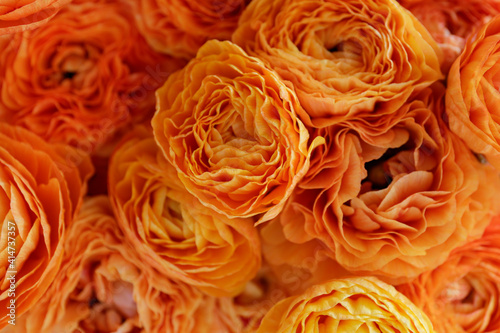 Macro shot of beautiful orange and red ranunculus bouquet. Visible petal structure. right patterns of flower buds. Top view, close up, background, selective focus, copy space for text, cropped image.