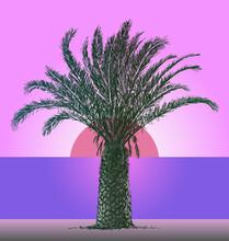 Vector Iillustration Of Silhouette Palm Tree On Seashore In Sunset