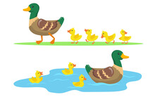 Duck And Ducklings Set. Cute Mother Duck And Yellow Babies Birds Walking On Grass And Swimming In Pond. Vector Illustrations For Farm Animals, Poultry, Countryside Concept