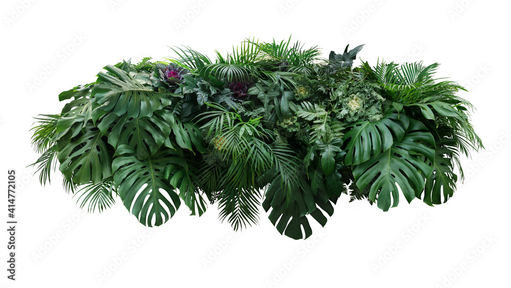 Fototapeta Tropical leaves foliage plant jungle bush floral arrangement nature backdrop with Monstera and tropic plants palm leaves isolated on white background, clipping path included.