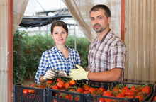 Portrait Of Successful Smiling Farmer Couple Standing In Vegetable Store Near Boxes With Freshly Picked Tomatoes In Greenhouse During Harvest