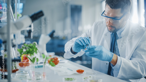 Fototapeta Handsome Male Microbiologist in Safety Glasses Examining Tomato's Locular Seed Cavities with Forceps and Putting a Sample in a Dish. Medical Scientist Working in a Modern Food Science Laboratory. obraz