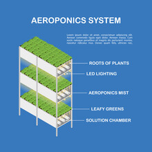 Diagram Of The Aeroponic Setup For Vertical Cultivation. Isometric Illustration, Infographics.