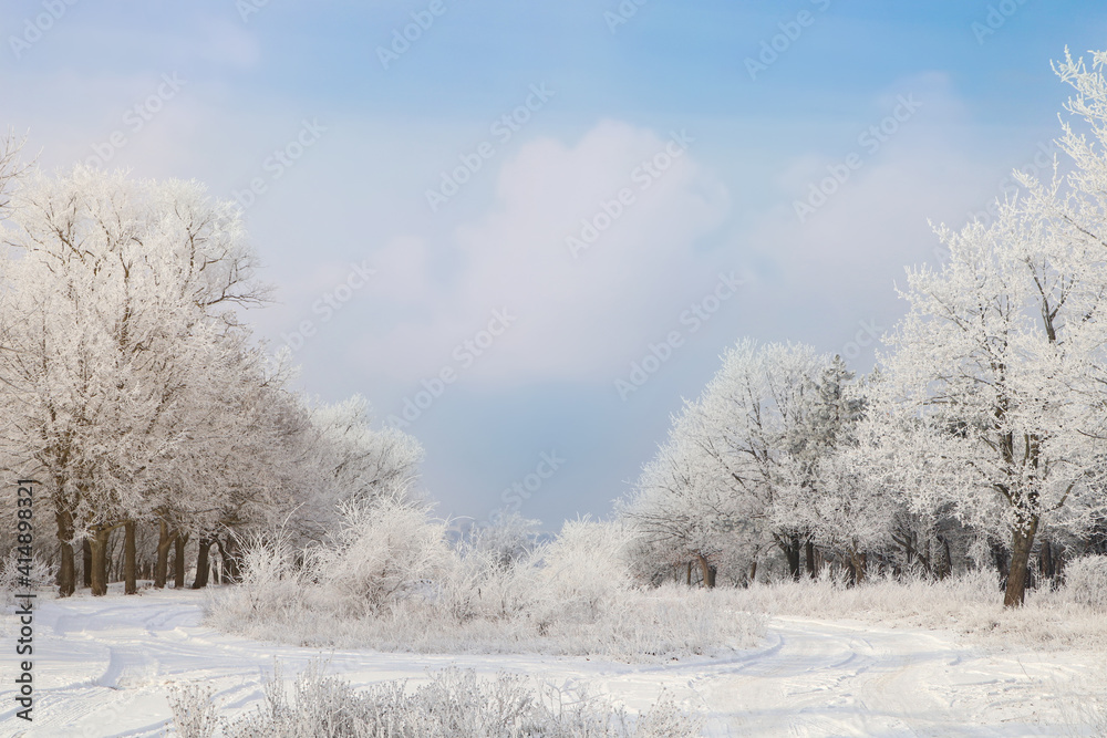 Fototapeta Plants covered with hoarfrost outdoors on winter morning
