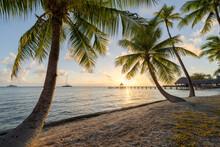 Beautiful Sunset At The Palm Beach