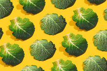 Cabbage Leaves On Yellow Background. Savoy Cabbage Minimal Pattern. Garden, Spring, Summer, Grow Concept