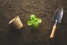Planting Basil In The Vegetable Garden