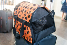 Carrier With Acat Is At The Station. Traveling With An Animal