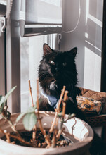 A Fluffy, Domestic Black Cat Sits On A Windowsill Near A Flowerpot And Looks At The Camera