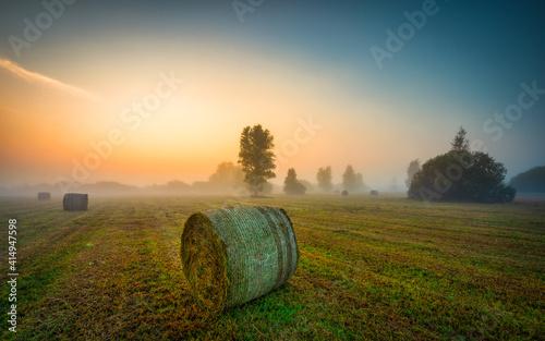 Fototapeta sunrise over the field