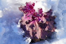 Head Of Decorative Purple Cabbage In The Snow In Winter