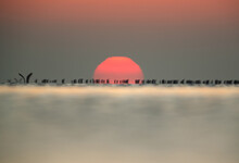 An Out Of Focus Image Of Great Cormorant During Sunrise At Asker Coast Of Bahrain