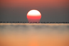 A Blur Image Of Great Cormorant Looking Like Brush On Horizon At Asker Coast Of Bahrain