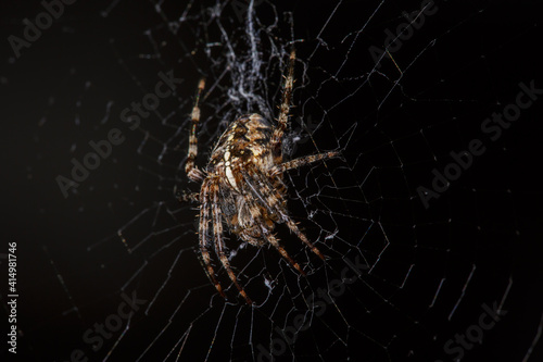 Canvas Print Cross spider on a web on a black background macro photography