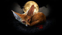 Fennec Fox, Fantasy Retouch On Moon And Dark Night