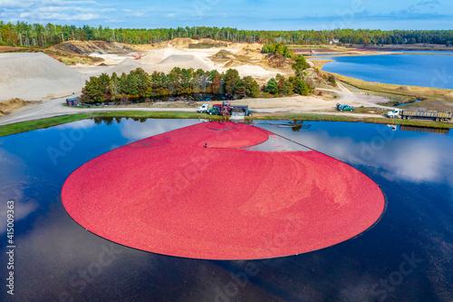 Massachusetts-Carver-Cranberry Harvest Fototapeta