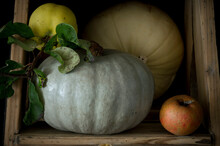 Still Life Of Fresh Ripe Apple, Quince And Crown Prince Squashes