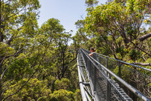 Female Tourist Admiring Views From Treetop Walkway Stretching Between Red Tingle Trees (Eucalyptus Jacksonii) Growing In Walpole-Nornalup National Park