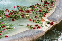 Italy, Rome. Fontana Della Barcaccia, By Pietro Bernini (1627-1629). Rose Petals Floating On Water In Fountain.