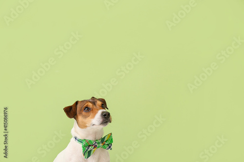 Fotografia Cute dog with green bowtie on color background