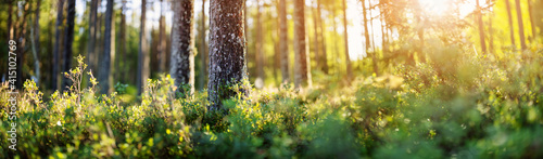 Beautiful view of the forest in early morning. Fototapeta