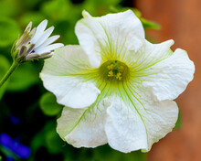 White Flower With Dew Drops