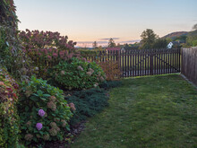 Sunset View Of Country House Garden In Autumn With Beautiful Various Hydrangea Flowers And Climbing Ivy, Creeping Wine And Bush Of Hortensia In Bloom. Copy Space.