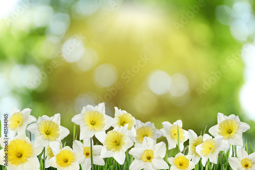 Beautiful spring flowers outdoors on sunny day