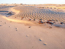 Coyote Tracks In The Barkhan Sand Dunes On The Barrier Island Of Isla Magdalena, Baja California Sur