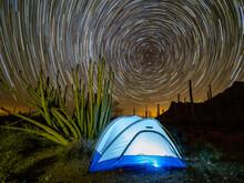 Organ Pipe Cactus At Night With Geminid Meteor Shower, Organ Pipe Cactus National Monument