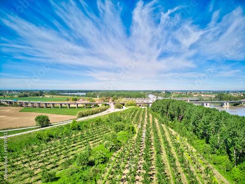 Fényképezés Italy, Mantua, poplar tree plantation, poplar trees are used to produce pulp for